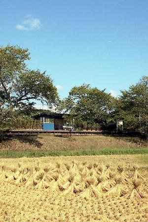 秋の小湊鉄道2010 13