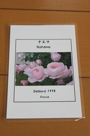 バラのネームタグ2