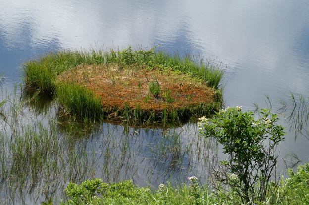 Photos: 八島が池3