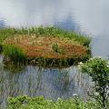 八島が池3