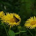 オグルマと蝶