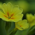 Photos: Spring has come!