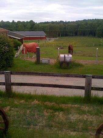 Hästgård