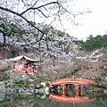 京都【桜】